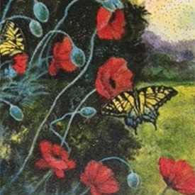 Painting of black swallowtail butterflies on red poppies