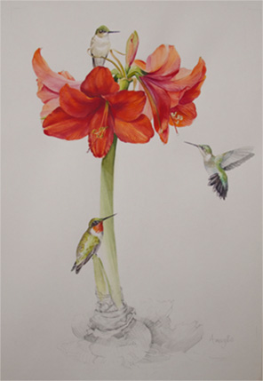 Watercolor of amaryllis by by Susan Bull Riley