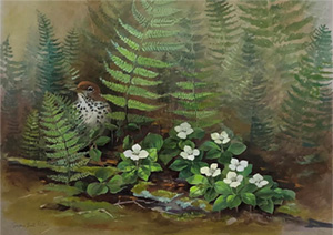 Watercolor of ferns and flowers by by Susan Bull Riley