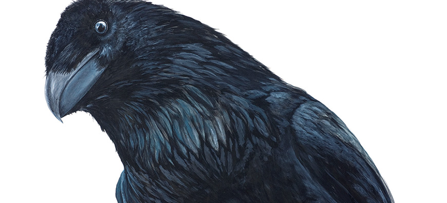 Painting of Raven by Linda Mirabile